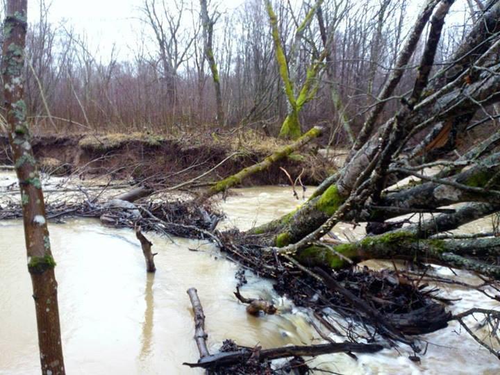 Photos of the river Sunija, Lithuania